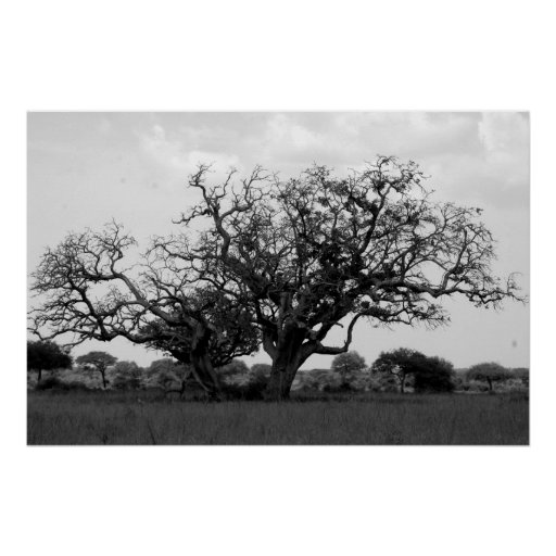 Árbol del safari poster