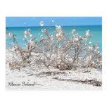 Árbol del Seashell en la isla de Marco Tarjetas Postales