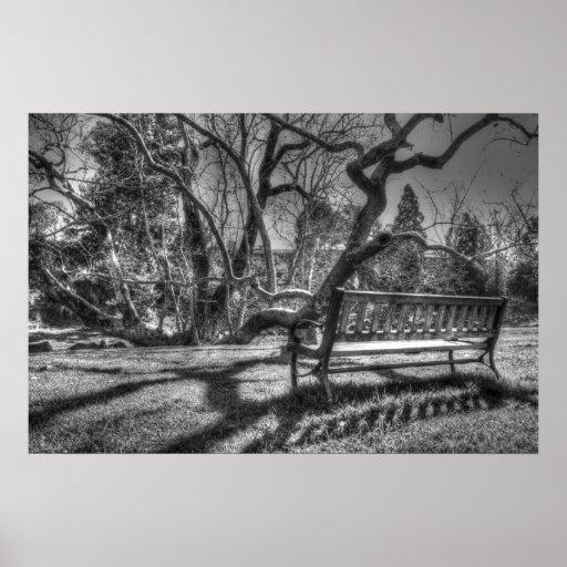 Árbol del sicómoro 'blanco y negro póster