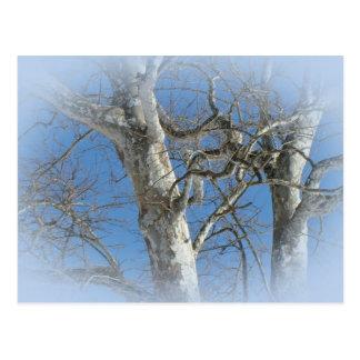Árbol del sicómoro contra artículos del cielo del  tarjetas postales