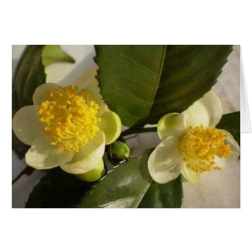 Árbol del té de Assam en la floración Tarjeta De Felicitación