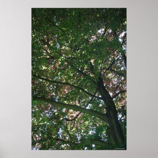 Árbol del verano impresiones