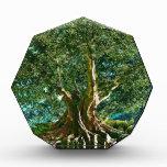 Árbol del verde de la vida