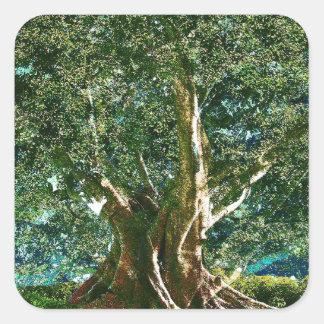 Árbol del verde de la vida calcomania cuadradas