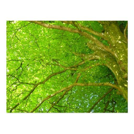Árbol del verde vivo con el sol que mira a escondi postal