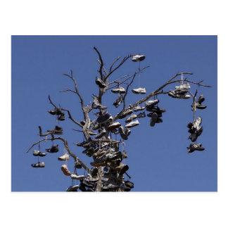 árbol del zapato del campo del morley tarjetas postales