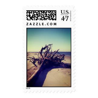 Árbol desarraigado en la playa sellos postales
