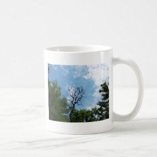 Árbol deshojado del acacia taza clásica