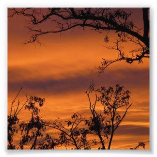 Árbol desnudo en la puesta del sol fotografías