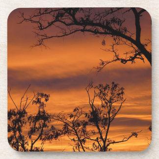 Árbol desnudo en la puesta del sol posavasos de bebida