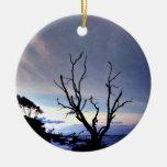 Árbol desnudo en orilla en la puesta del sol adornos de navidad