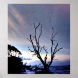 Árbol desnudo en orilla en la puesta del sol impresiones