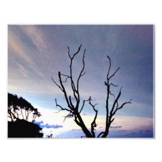Árbol desnudo en orilla en la puesta del sol arte fotográfico