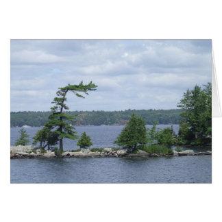 Árbol doblado, Muskoka, Ontario, Canadá Tarjeta