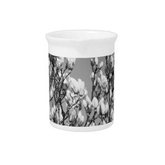 Árbol elegante blanco y negro de la magnolia jarra