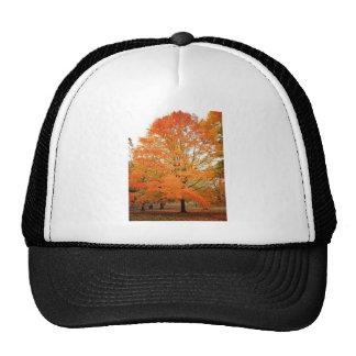 Árbol en Central Park, New York City del otoño Gorro De Camionero