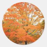 Árbol en Central Park, New York City del otoño Pegatina Redonda