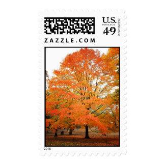 Árbol en Central Park, New York City del otoño Franqueo