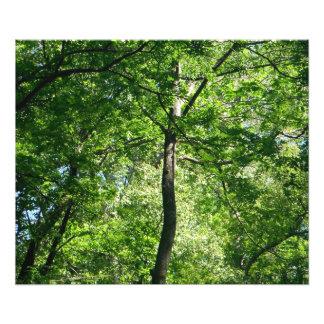 Árbol en el bosque fotografías
