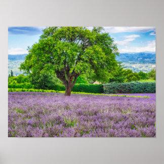 Árbol en el campo de la lavanda, Francia Póster