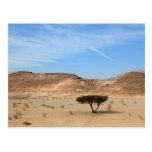 Árbol en el desierto, Sinaí del sur, Egipto Tarjeta Postal
