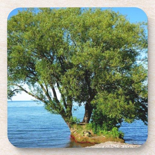 Árbol en el lago posavaso