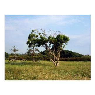Árbol en el parque de Arasaki Postal