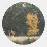 Árbol en el parque de Sholom Pegatina Redonda
