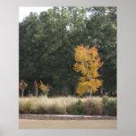 Árbol en el parque de Sholom Posters