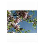 Árbol en flor tarjetas postales