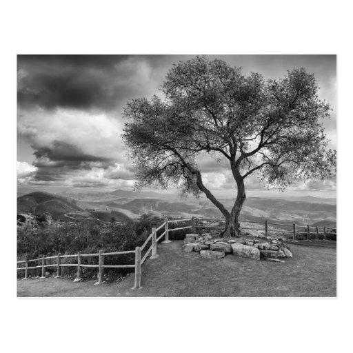 Árbol en la cima de la colina tarjetas postales