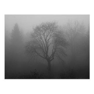 Árbol en la niebla postales