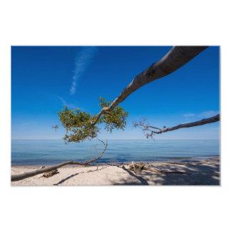 Árbol en la playa en la orilla del mar Báltico Cojinete