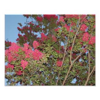 Árbol en la plena floración fotografía