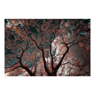 Árbol en NJ Impresion Fotografica