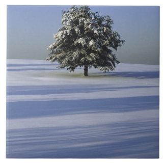 Árbol en paisaje nevado azulejo cuadrado grande