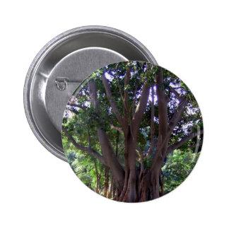 Árbol en parque pins