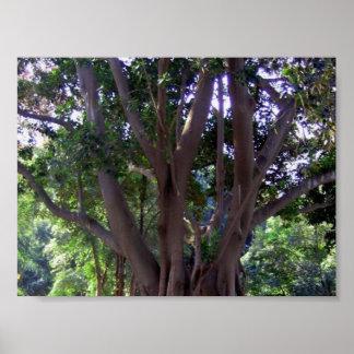 Árbol en parque póster