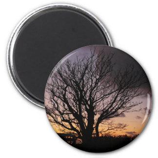 Árbol en puesta del sol del invierno imán redondo 5 cm