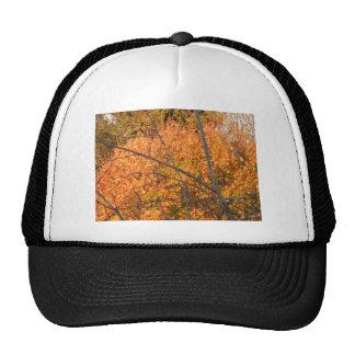 Árbol en regalía del otoño gorros