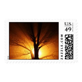 Árbol en sellos de la niebla de la noche