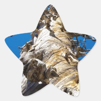 Árbol esquelético con el cielo azul pegatina en forma de estrella