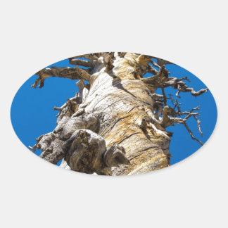 Árbol esquelético con el cielo azul pegatina ovalada