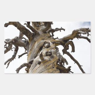 Árbol esquelético con las nubes pegatina rectangular
