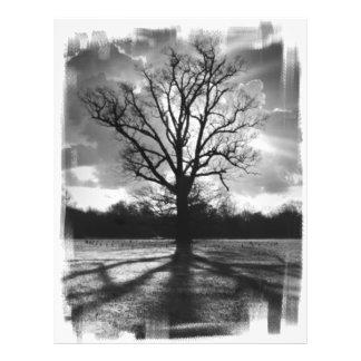 """Árbol estéril de las ramas folleto 8.5"""" x 11"""""""