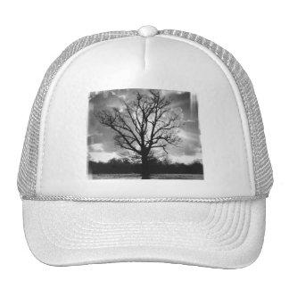 Árbol estéril de las ramas gorra