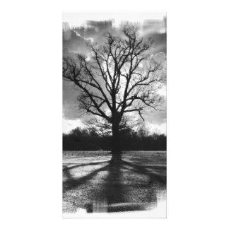 Árbol estéril de las ramas plantilla para tarjeta de foto