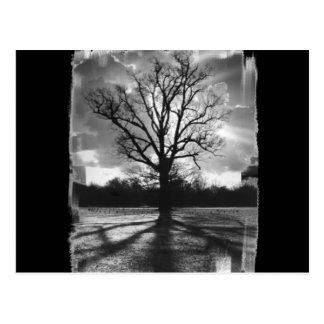 Árbol estéril de las ramas postales