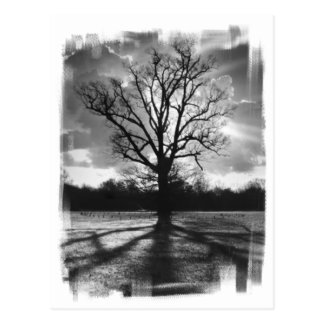 Árbol estéril de las ramas tarjetas postales