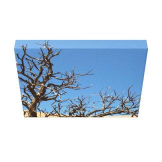 Árbol estéril en desierto impresión de lienzo